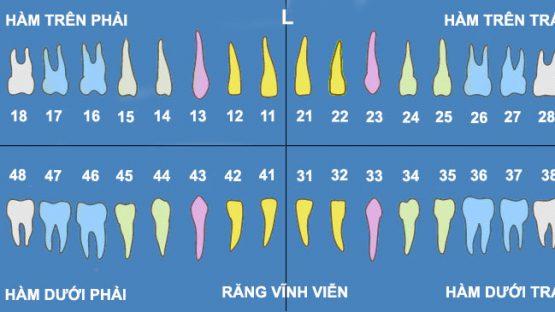 Nhổ răng số 18 – Kinh nghiệm nhổ răng an toàn, không đau nhức